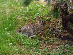 Cemetery Rabbit by KatrinaFTW44