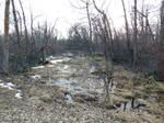 Spring Walk at Dusk by KatrinaFTW44