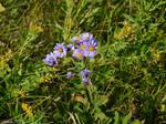 Fleabane Flowers 2 by KatrinaFTW44