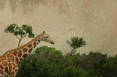 Textured Giraffe
