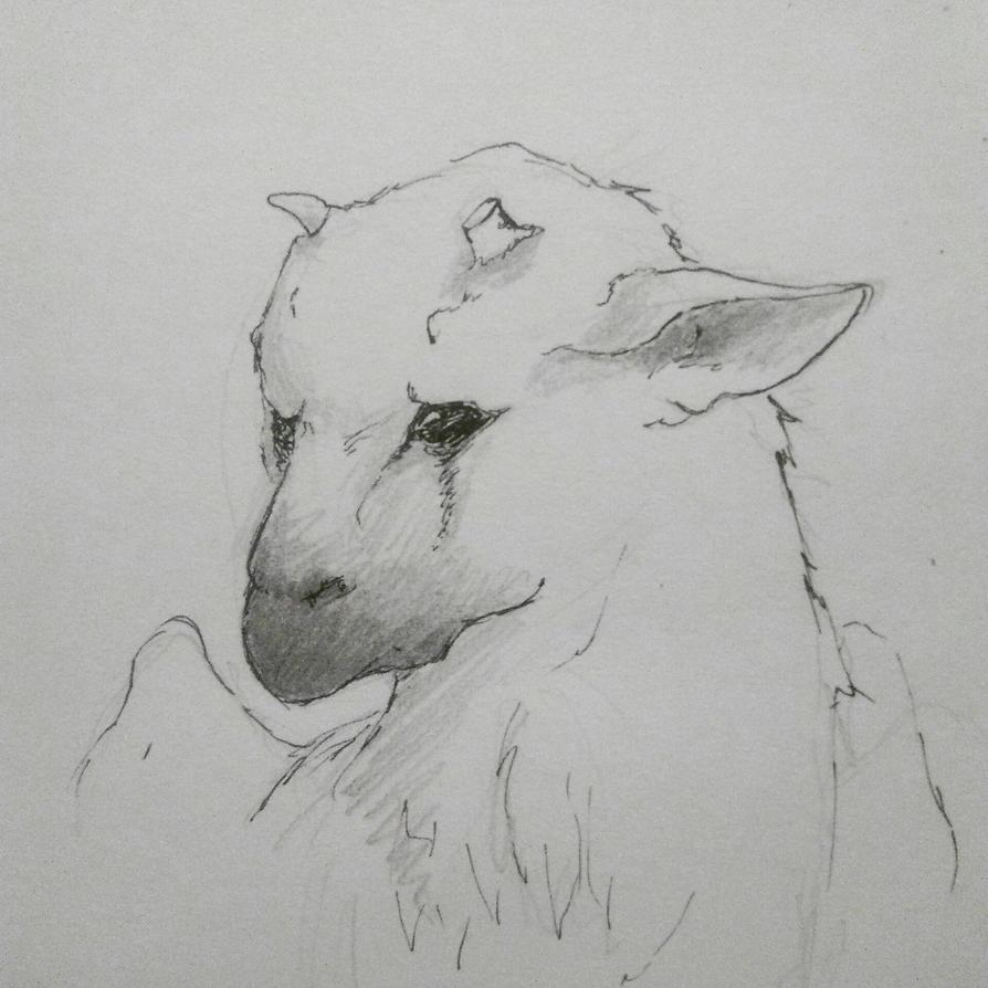 Trico sketch by MarcCaixas
