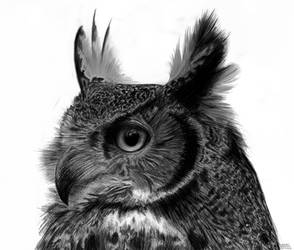 Great Horned Owl by agnes-green
