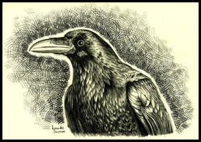 Crow. by agnes-green