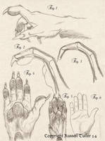 Comparative Anatomy Wolf Anthro Hand by RussellTuller