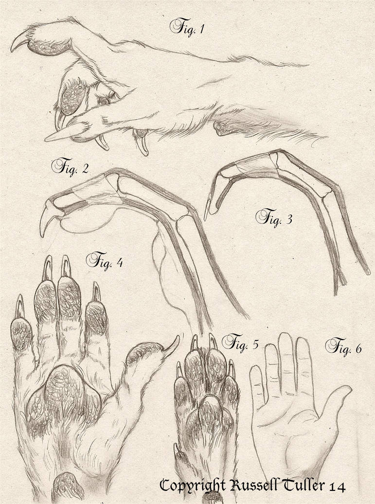 Comparative Anatomy Wolf Anthro Hand By Russelltuller On