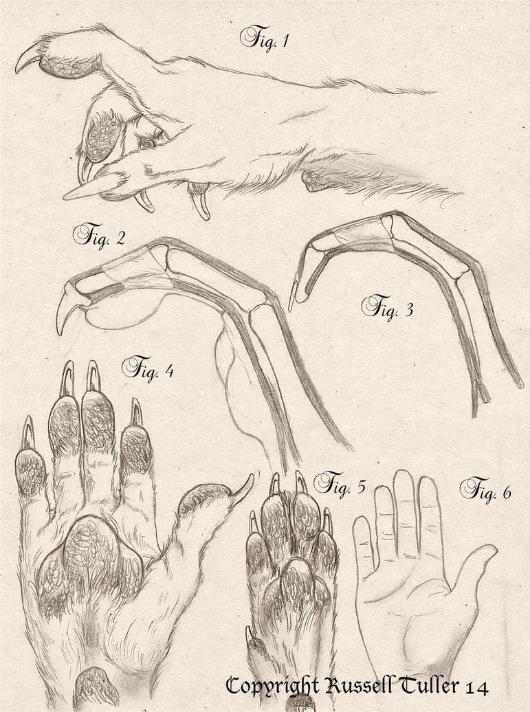Fein Anatomie Des Menschen Zeichnung Tutorial Ideen - Menschliche ...