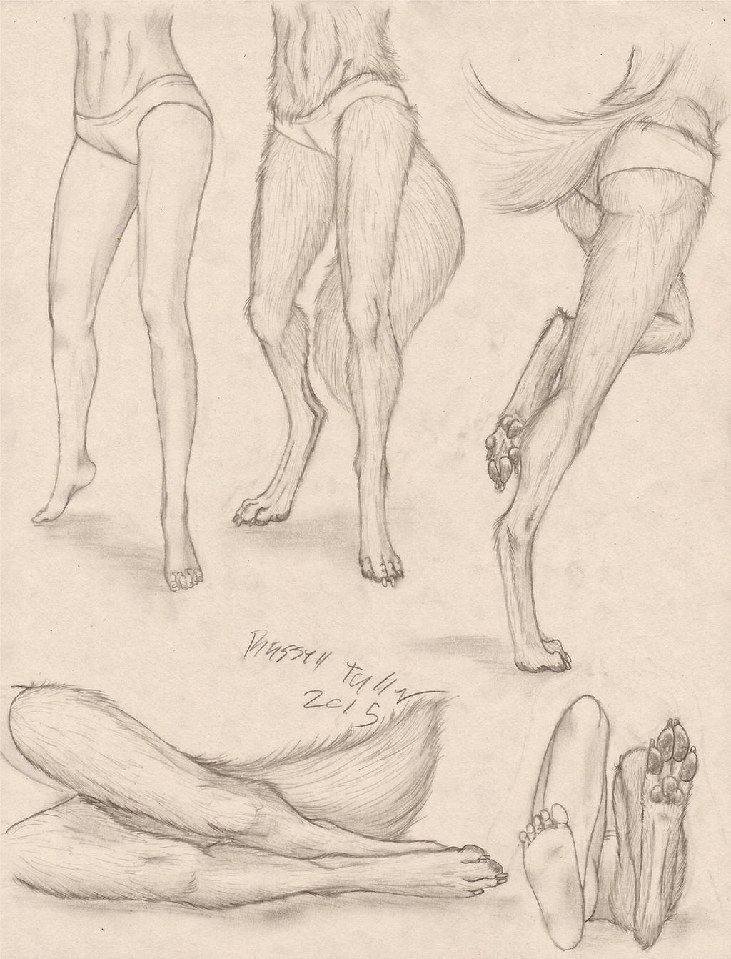 Anthro Canine Female Lower Body Study by RussellTuller on DeviantArt