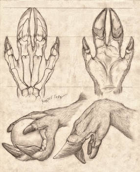 Cervine Hand Anatomy Study