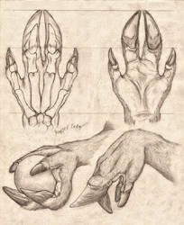 Cervine Hand Anatomy Study by RussellTuller