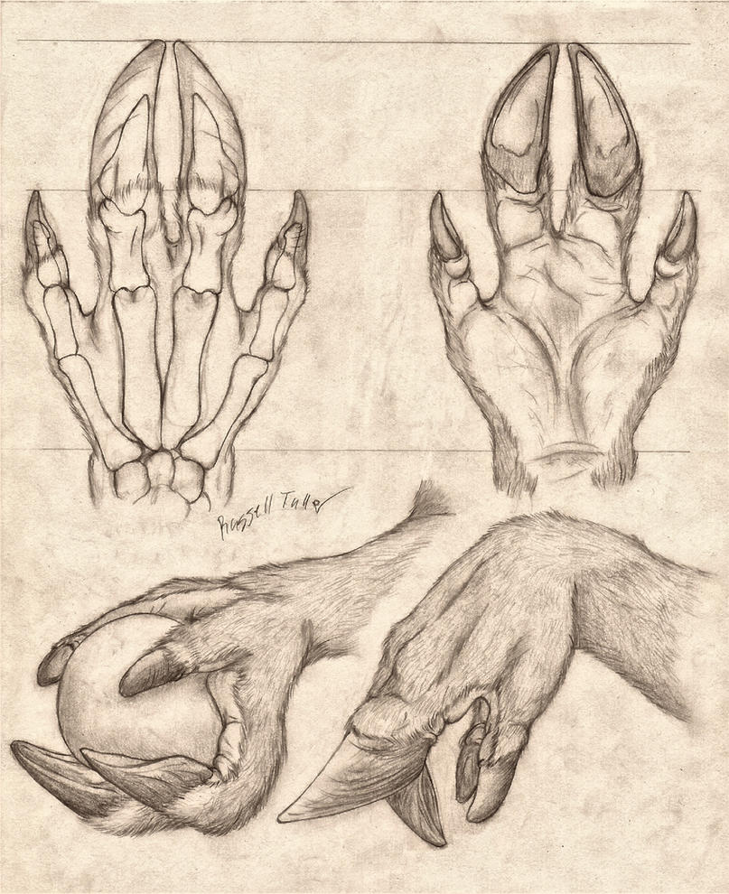 Cervine Hand Anatomy Study by RussellTuller on DeviantArt