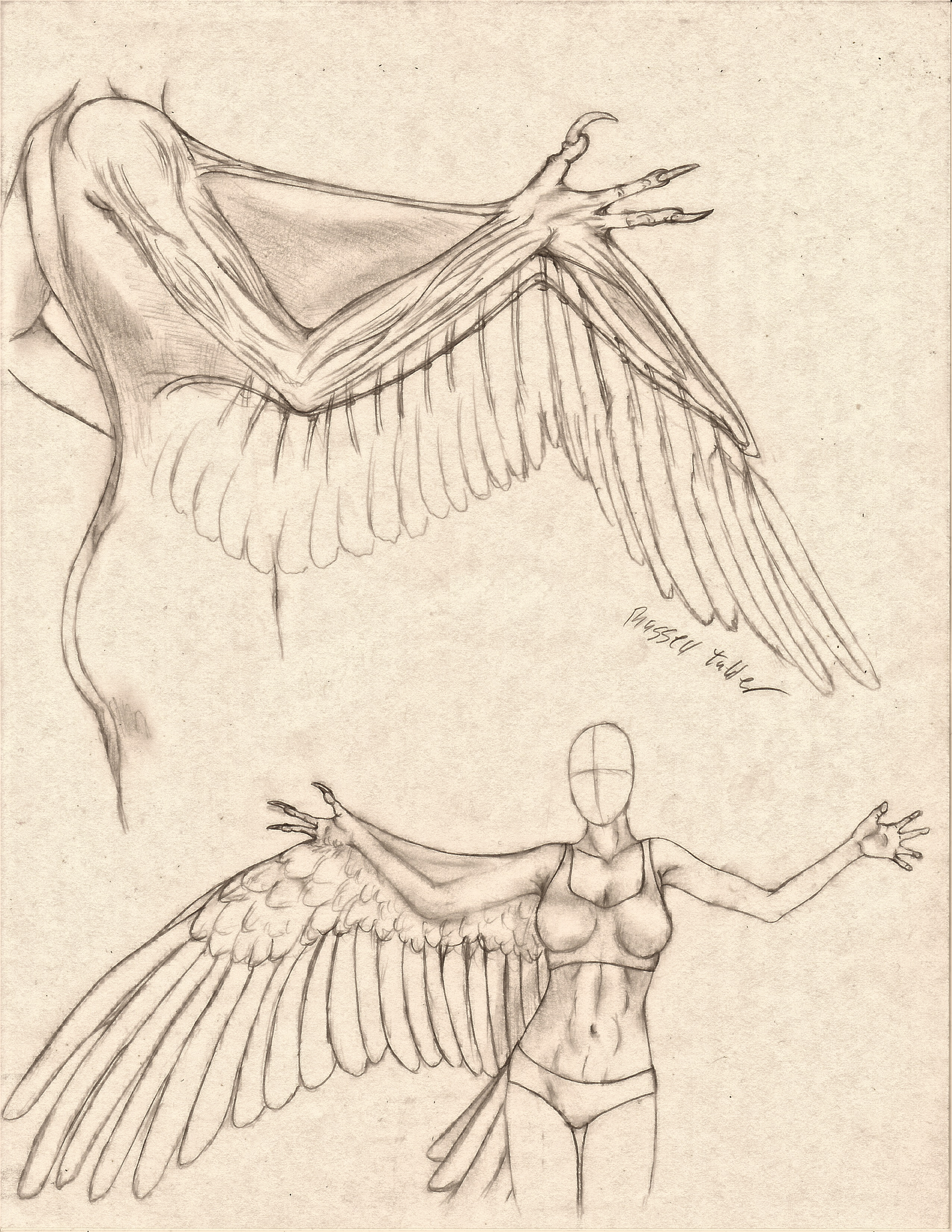 Anthro Avian Arm/Wing Comparative Anatomy Study by RussellTuller on ...