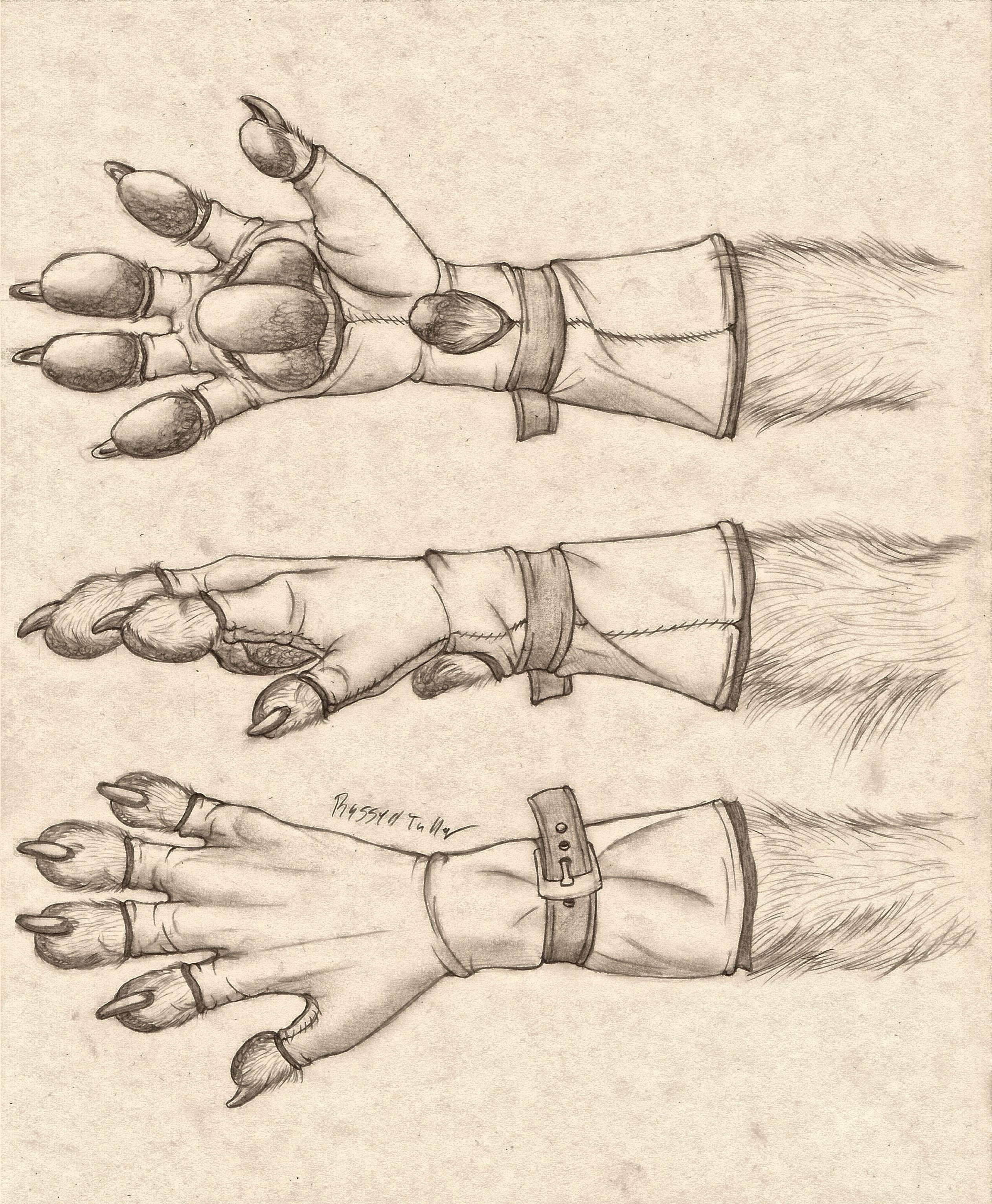 Anthro Paw Glove Design