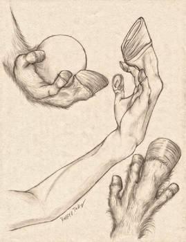 Equus Hand Anatomy Study