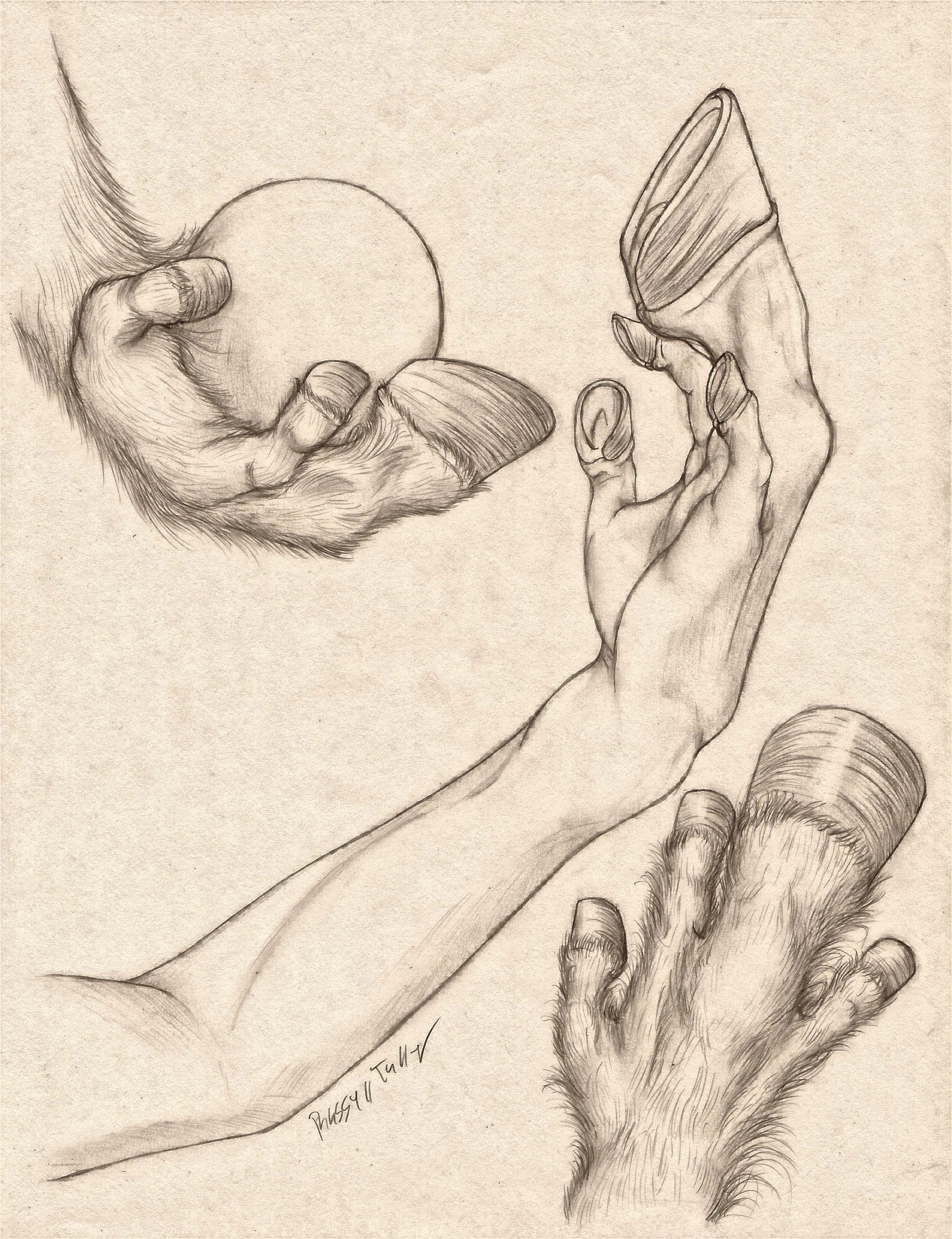 Equus Hand Anatomy Study by RussellTuller on DeviantArt
