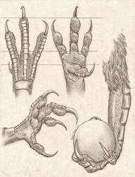 Anthro Avian Hand Anatomy Study by RussellTuller