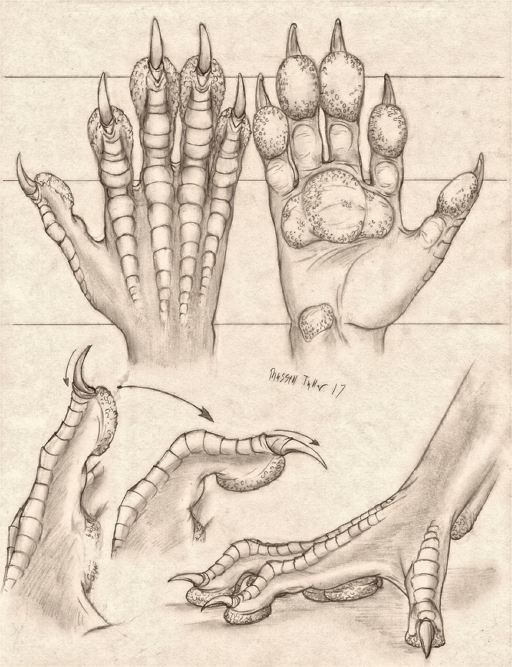 Pawed Dragon Hand Anatomy Study by RussellTuller