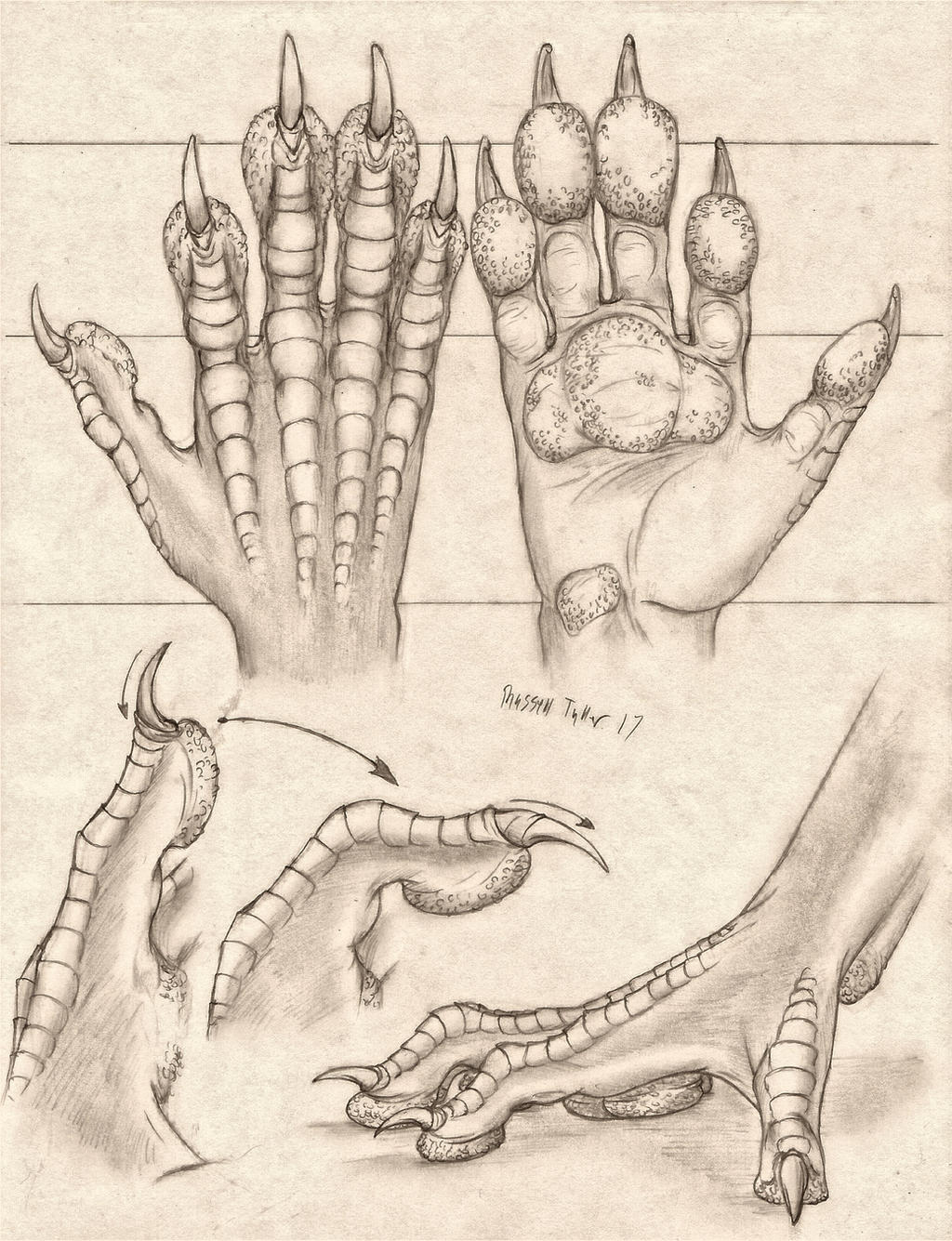 Pawed Dragon Hand Anatomy Study