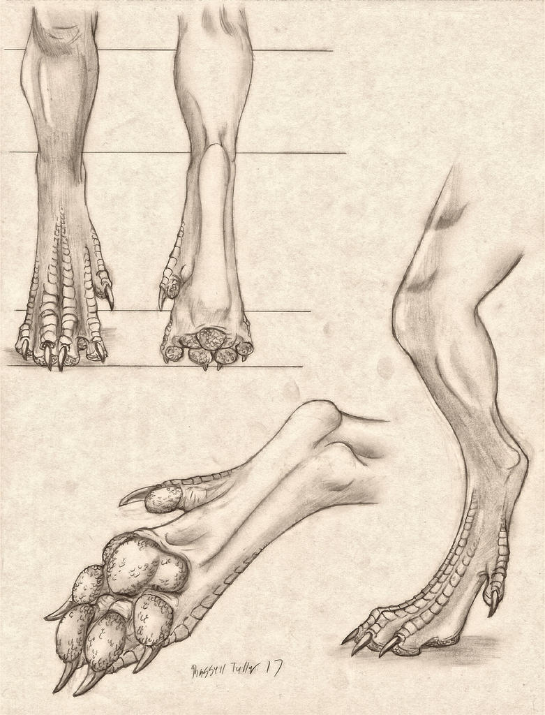Pawed Dragon Leg/Foot Anatomy Study by RussellTuller on DeviantArt