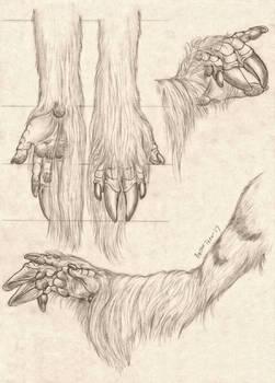 -Commission- Dragon/Unicorn Arm Study