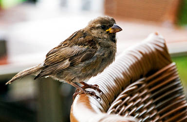 Bird by Ashstorm