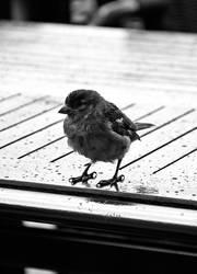 Bird 2 by Ashstorm