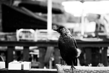 Bird 3 by Ashstorm