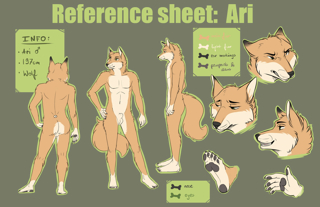 Reference Sheet : Ari by ShaneTheWolf