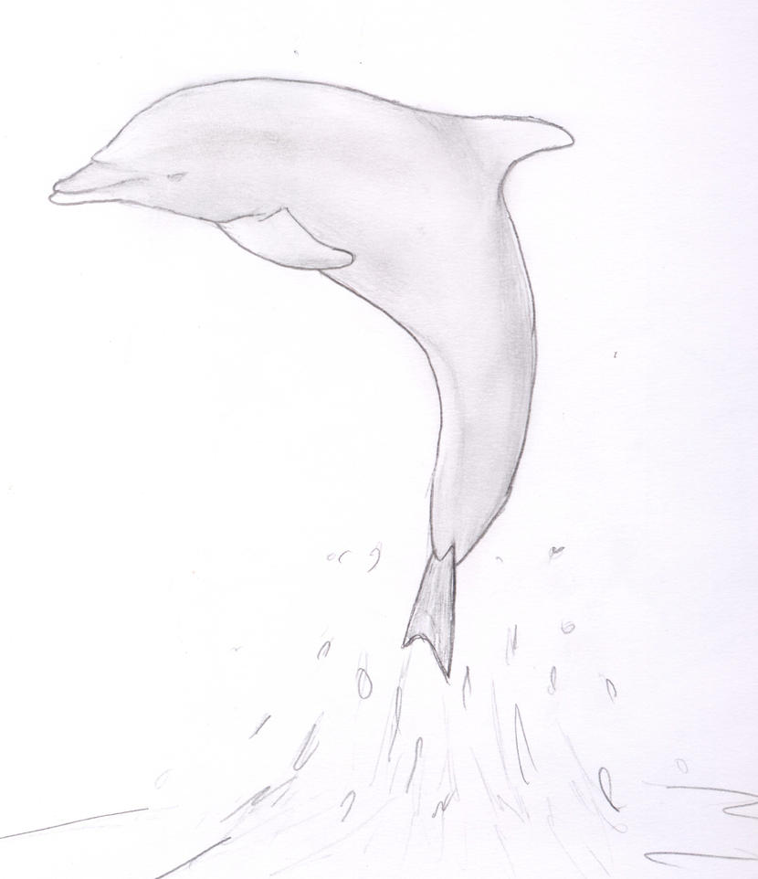 Dolphin Sketch by ibbie2010 on DeviantArt