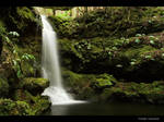 Forest Hymn II