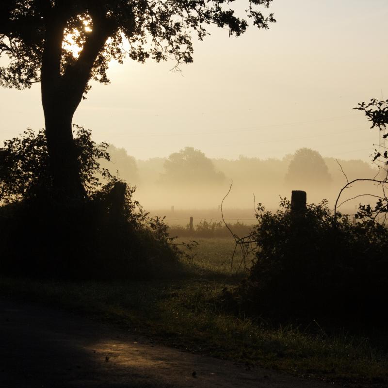 foggy morning by UniHydra