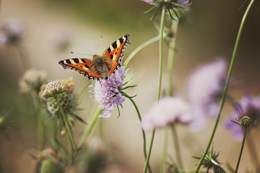 mariposa by UniHydra