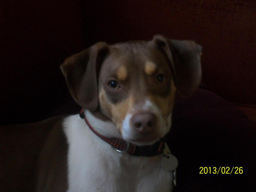 Puppy Dog Eyes by Livid-Star