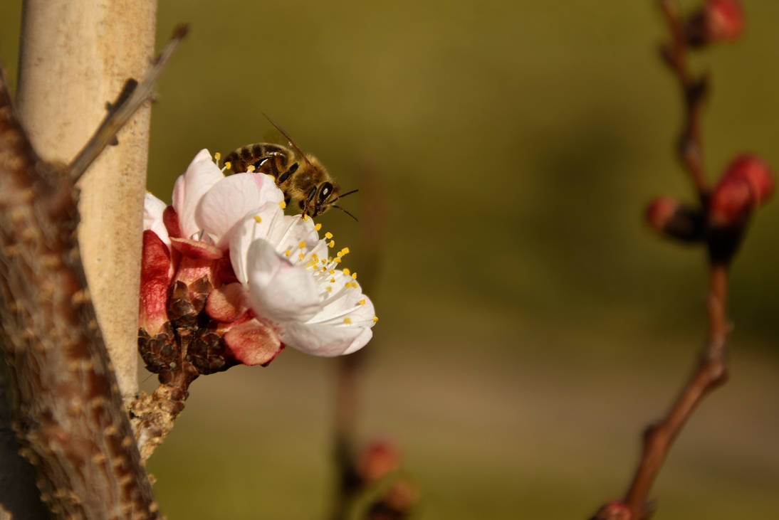 Bee spring!