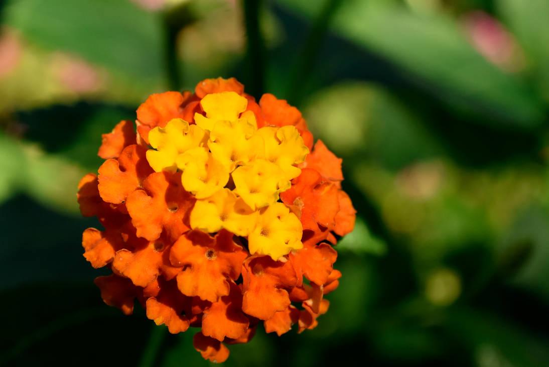 Blossomed butterflies