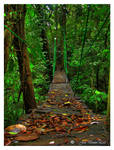 musun bridge by Valmont-jose