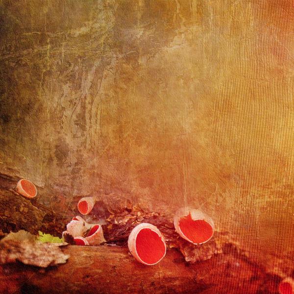 autumn mushrooms by Lwsypher