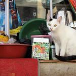 Picture Cat