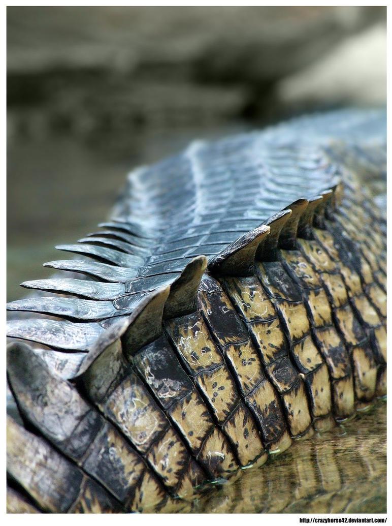 Crocodile tail - photo#25