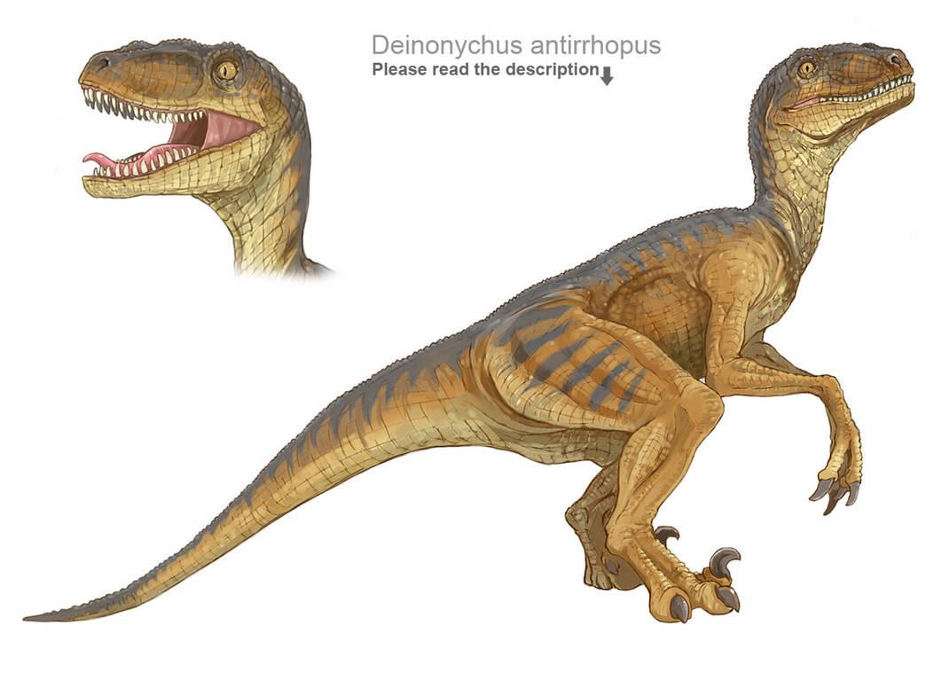 Deinonychus antirrhopus by crazyhorse42