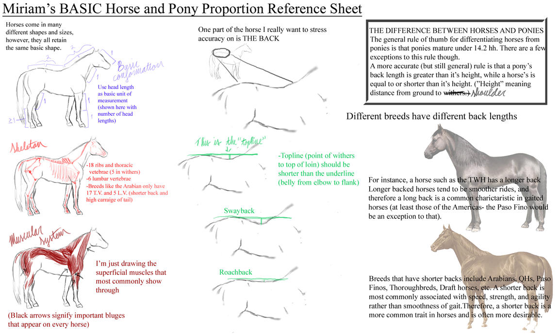 Basic Horse Anatomy Reference by SongoftheHorse on DeviantArt