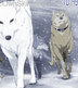 Wolfs rain phone template by LIAMODEARME