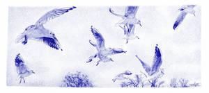 Seagulls. Blue biro