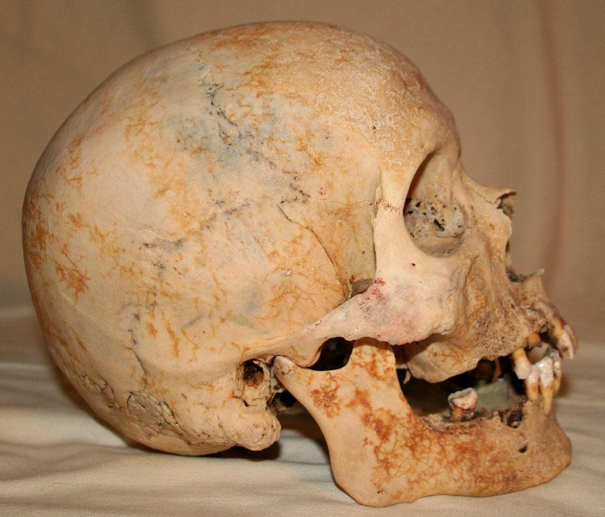 Skull Stock Photo 02 by Aleuranthropy