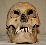 Skull Stock Photo 03