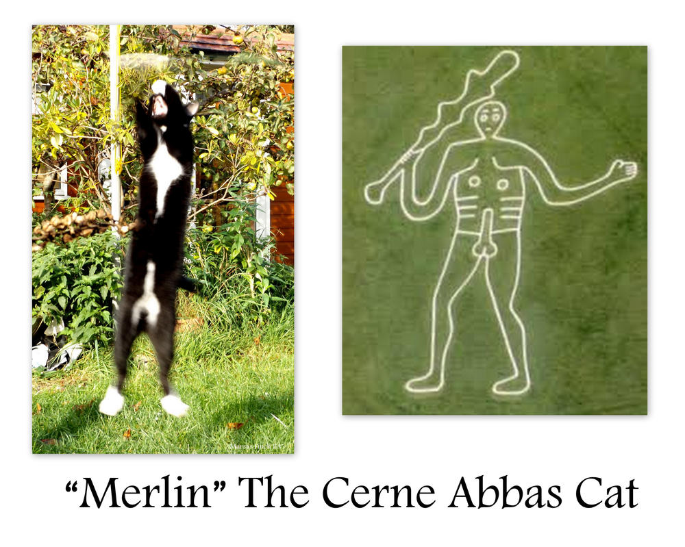 Merlin the Cerne Abbas Cat by Krystalvoyager