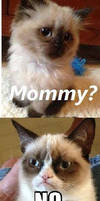 Grumpy cat by Candygirl29