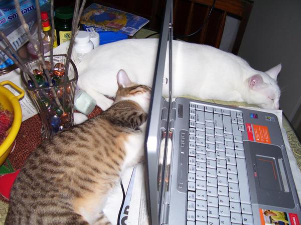 Cat Entropy