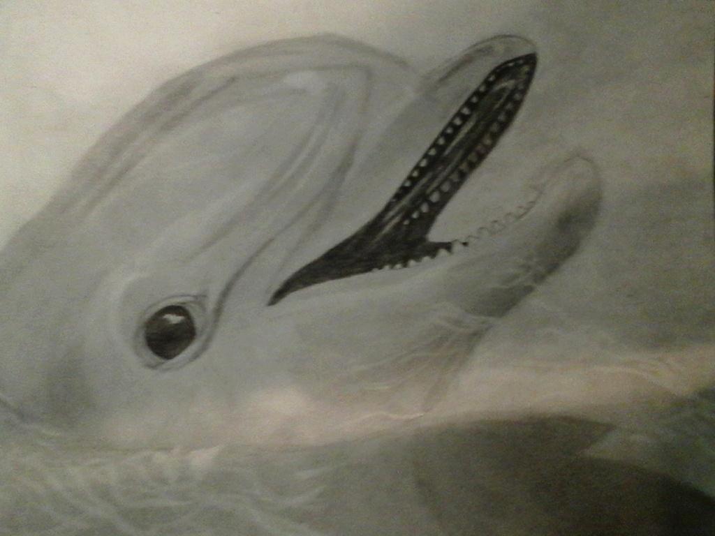 Dolphin by uchihawolfalex