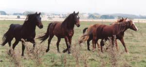 Fast Herd