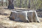 Treestump 002 - slightly burry